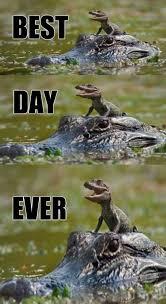 Best Day Meme - best day ever meme funny goblin