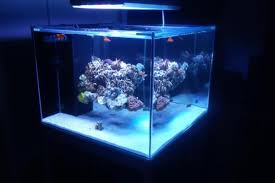 Reef Aquascape Designs Floating Aquascape Reef2reef Saltwater And Reef Aquarium Forum