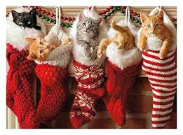 cat christmas 10 awesome cat christmas cards cat confidential
