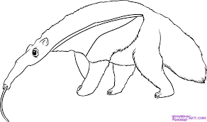 6 how to draw an anteater