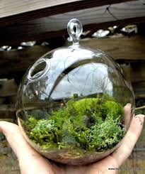 108 best finished terrariums for you images on pinterest