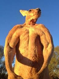 imagenes animales australia lista animales de australia los animales más letales y raros en vídeo