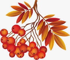 thanksgiving material thanksgiving material berry thanksgiving vector material