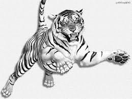 tiger drawing pictures 10 cool tiger drawings for inspiration