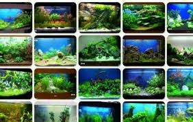 idee deco aquarium aquarium dekorieren tipps ideen youtube