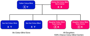 Is There A Cure To Color Blindness Inherited Colour Vision Deficiency U2014 Colour Blind Awareness