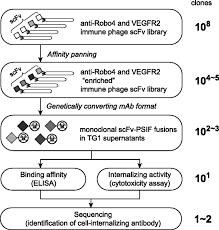 robo4 is an effective tumor endothelial marker for antibody drug