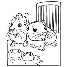 25 free printable guinea pig coloring pages