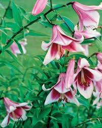 Low Maintenance Plants And Flowers - beautiful low maintenance plants fine gardening
