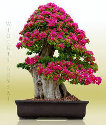 72 best a walk through the small world of bonsai images on