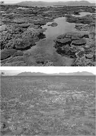 coral reefs in the anthropocene persistence or the end of the