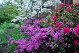 Pink Spring Flowering Shrubs - shrubs for shade gardens