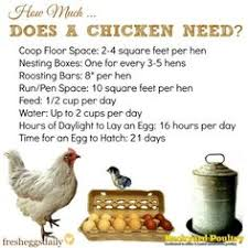 15 chicken nesting box hacks more chicken nesting boxes