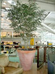 36 best artificial trees interior images on artificial