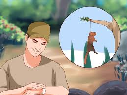 how to make a squirrel snare with pictures wikihow