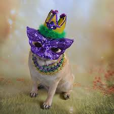 mardi gras pet collar fleurty 202 best mardi gras images on carnivals king cakes and
