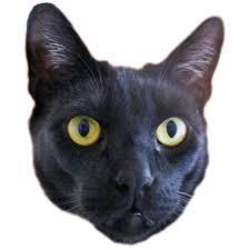 humane society black friday black cat friday valley humane society pleasanton california