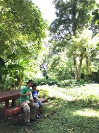 Up Los Banos Botanical Garden by Makiling Botanic Gardens Los Banos Philippines Top Tips Before