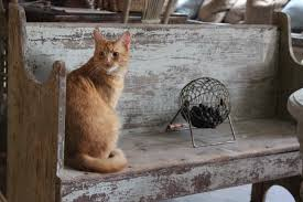 cat on a shabby cool bench