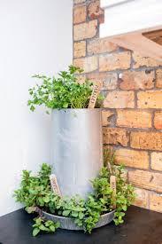 countertops small kitchen herb garden best kitchen herbs ideas