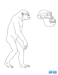 australopithecus sleeping in a tree coloring pages hellokids com