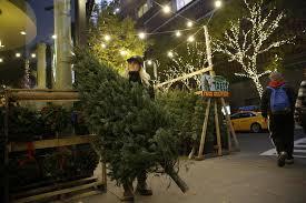 peddlers flock to new york city for christmas tree season
