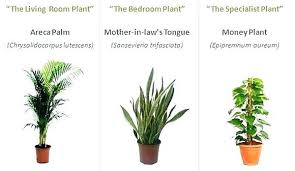 best indoor plants for low light best indoor plants for low light office www lightneasy net