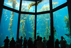 Where Is Chicago In The Us Map by The 12 Best Aquariums In The U S For 2017 Tripping Com