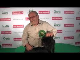 affenpinscher crufts 2014 top dog croydon pooch pinches prize for best of breed at crufts