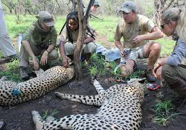 sle resume journalist position in kzn wildlife ezemvelo accommodation zululand games reserve conservation expedition south africa