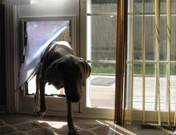Patio Pacific Pet Doors Best 25 Dog Door Flaps Ideas On Pinterest Pet Door Dog Rooms