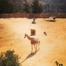 Tisch Family Zoological Gardens - jerusalem biblical zoo picture of tisch family zoological