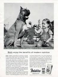 boxer dog umbrella circus animal trainers w boxer dogs vintage photo bulldog boxer