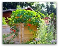 Indoor Vegetable Container Gardening - 161 best vegetable garden beginner plans images on pinterest