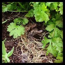 bunny nest homemade u2022handmade