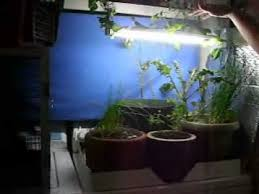 growing plants indoors with artificial light grow indoors home survival long version artificial light winter