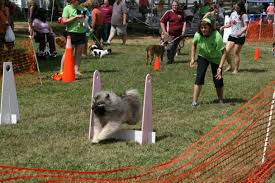 belgian sheepdog nc akc responsible dog ownership days returns for its 15th year host