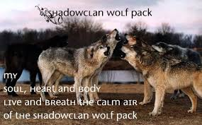 view topic shadowclan wolf pack accepting wolves v 2