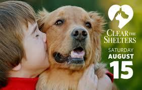 pet adoption u2013 face foundation