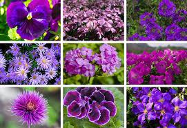 Garden Pots Ideas 25 Purple Flower Ideas For Your Garden Pots And Planters