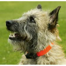 dog barks when we leave bark collar get you results to stop barking dogs