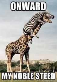Ermahgerd Animal Memes - ermahgerd animals google search funny pinterest