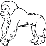 coloring page of gorilla gorillas coloring pages free coloring pages