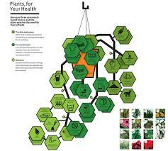 10 best plants for improving air quality u2013 raven tao big city