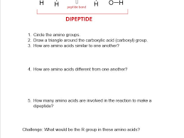 protein worksheet dna protein synthesis worksheet worksheets for
