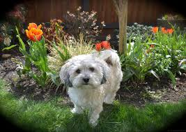 Backyard Landscaping Ideas For Dogs Pet Friendly Portland Landscaping Designs