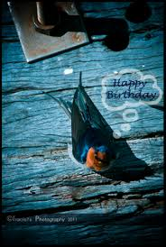 a little bird told me it u0027s ur bday free happy birthday ecards
