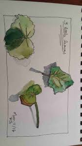 49 best student work from my online sketching and watercolor