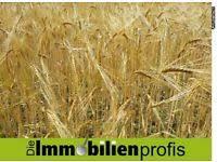 landwirtschaftliche fläche kaufen landwirtschaftliche kleinanzeigen für immobilien ebay kleinanzeigen