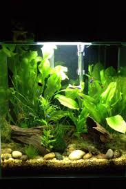 Fluval Edge Aquascape Barleybear 12 Gallon Fluval Edge Your Tanks